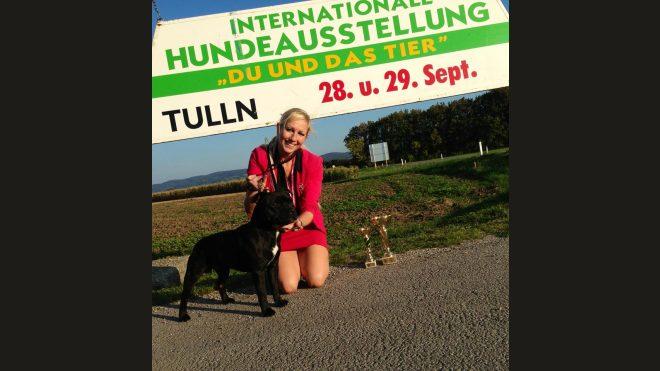 Bundessiegerschau 2013 Österreich