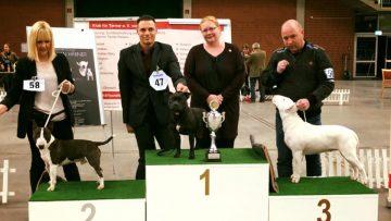 Best in Show Terrier Spezialschau Paaren-Glien