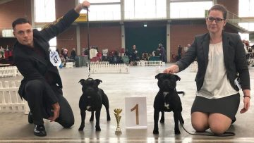 Best of Breed Terrier Spezialschau Paaren-Glien