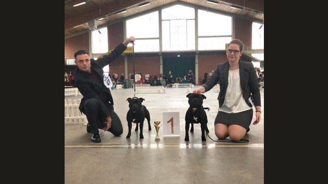 Best of Breed Terrier Spezialschau Paaren-Glien