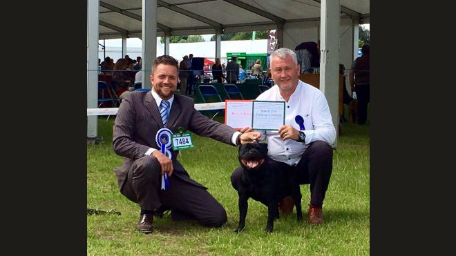 6.8.2016 Best of Breed & CC Windsor 2016