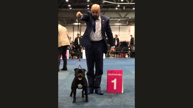 World Dog Show Leipzig 2017