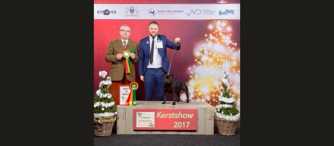 CACIB Gorinchem Kerstshow 2017 Bester Staffordshire Bull Terrier der Show