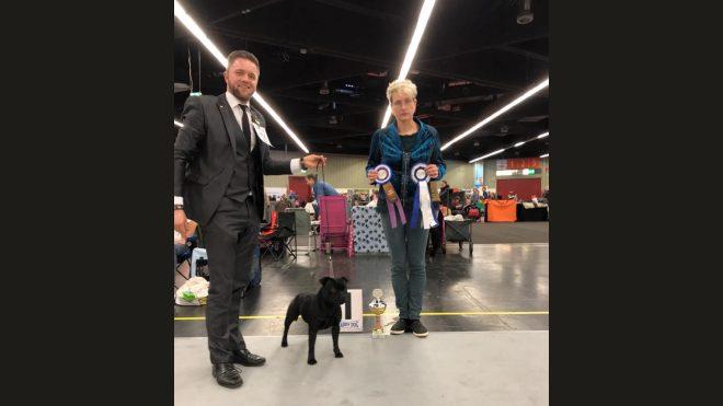 Bester Staffordshire Bull Terrier Hundeausstellung Nürnberg
