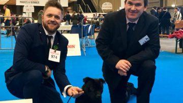 Beste Staffordshire Bull Terrier Hündin in Eindhoven