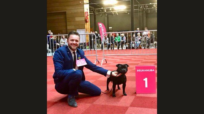 Beste Staffordshire Bull Terrier Hündin auf der CACIB in Groningen