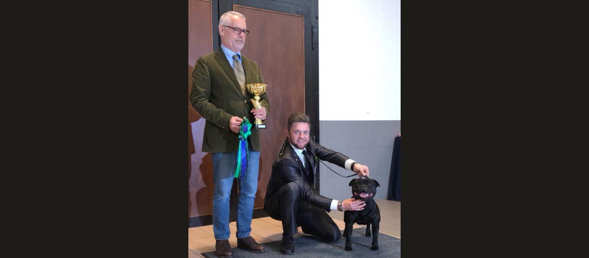 Bester Staffordshire Bull Terrier der Spezialschau in Hamm