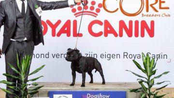 Best of Breed auf der CACIB Tilburg in Holland