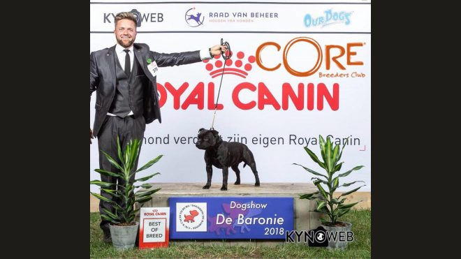 Best of Breed auf der CACIB Tilburg in Holland
