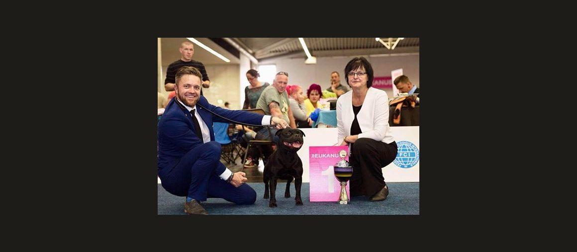Best of Breed auf der internationalen Hundeausstellung in Dortmund