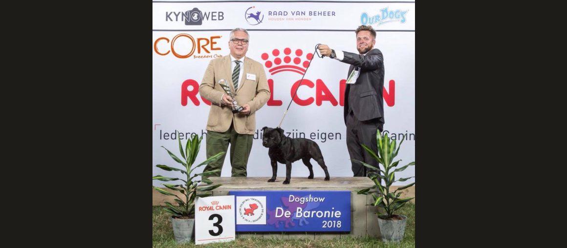 Dritter Platz in der FCI Gruppe 3 auf der CACIB Tilburg