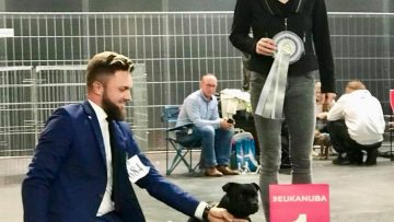 Best of Breed auf Nationaler Hundeausstellung in Bremen