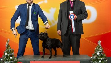 Best of Breed - CACIB Amsterdam Holland Cup Winner 2018