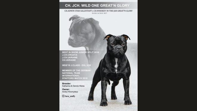 Bester Staffordshire Bull Terrier 2018