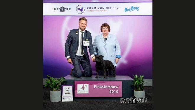 45. Pinkstershow Netherlands