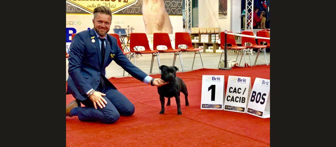 Internationale Show Genk Belgium