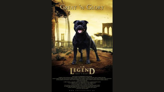 Ch.MultiJCh. I Am Legend Great 'n Glory
